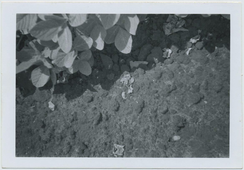 Find-5